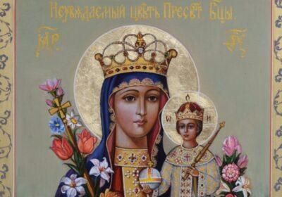 7-те чудотворни цветя на Богородица – засади ги в дома си и ще привлечеш щастието и късмета